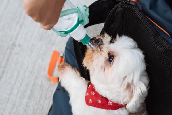 Foto de cachorro bebendo água na rua em uma garrafinha.