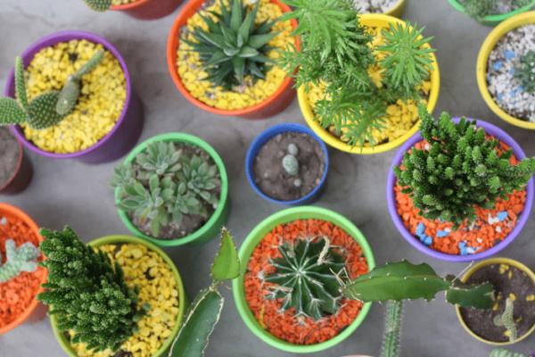 Foto de diferentes plantas, com vasos coloridos.